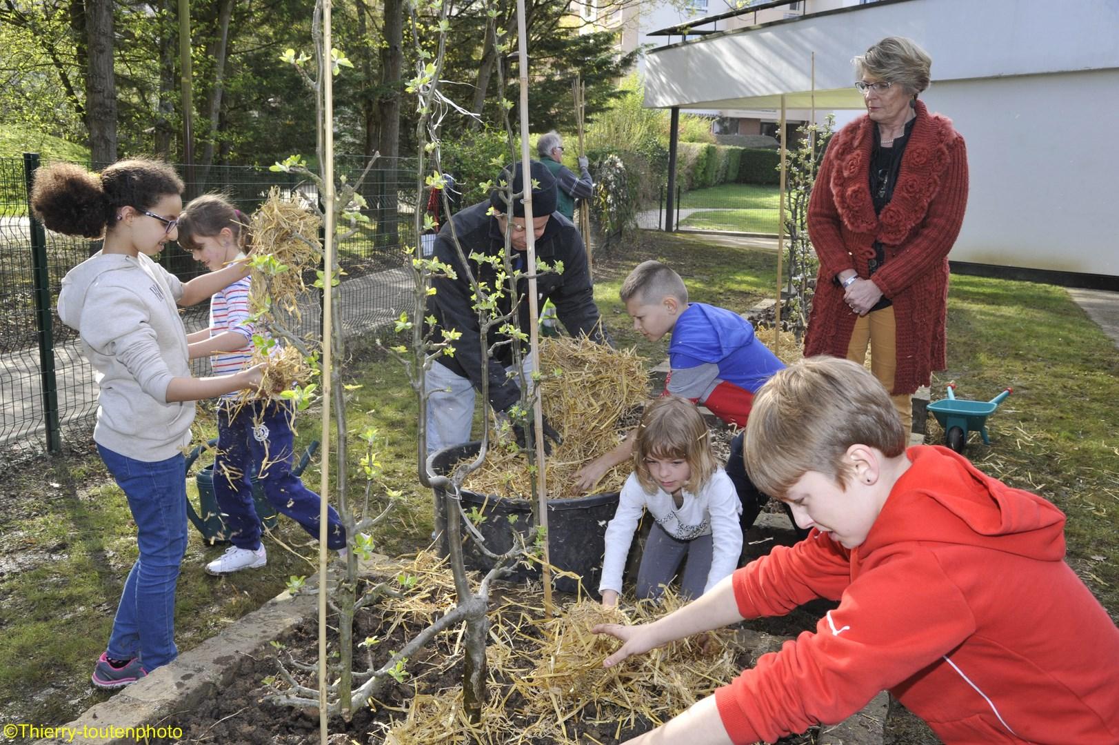 Vaires sur marne les enfants plantent des arbres fruitiers for Au coin de la piscine le gardeur