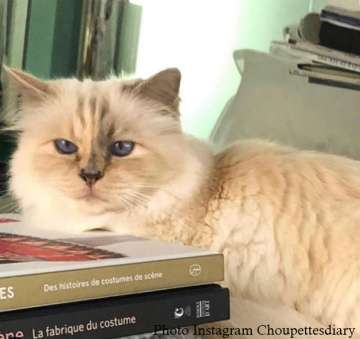 Choupette Lagerfeldfévrier 2019